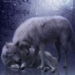 Avatar of user Queen_Wolf