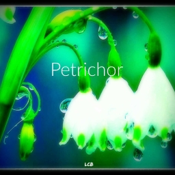 Cover of track Petrichor by LcB