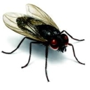 Avatar of user The fly on the wall of AT