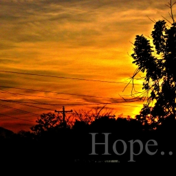 Cover of track Hope by 2063073