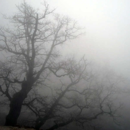 Cover of track Fog by Twiilight