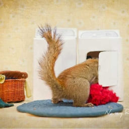 Cover of track squirrel in a washing machine by SHONINABAG