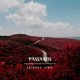 Cover of track Pássaros by erilson_lima
