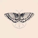 Avatar of user Moths with Headphones