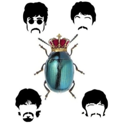 Avatar of user RoyalBeatle