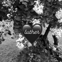 Avatar of user luther