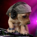 Avatar of user DJ Doggy